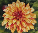 Little Flame Pom Pom Dahlia - by Helen Shideler
