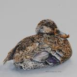Sitting Duck - By Helen Shideler
