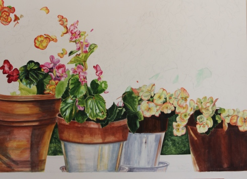 Begonias on Parade