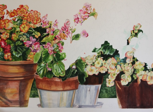 Begonias on Parade - Helen Shideler