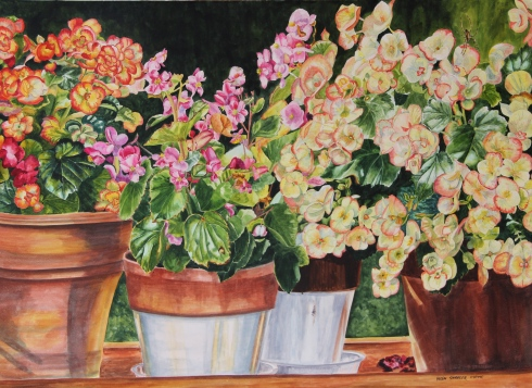 Begonias On Parade by Helen Shideler